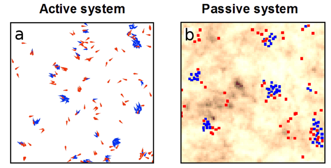 Active-Passive-CollBeh-Simulations